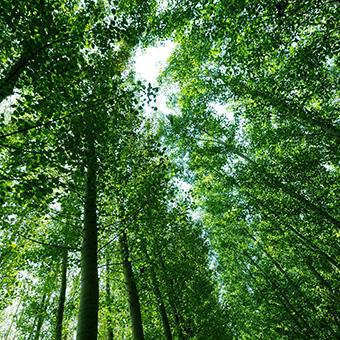 Ecosystem - Forest Carré